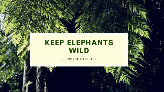 Keeping Asian elephants wild